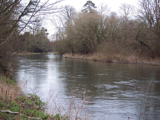 The Wiltshire Avon near Bodenham