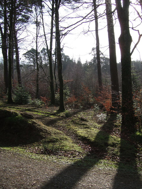 Abbeyford Woods