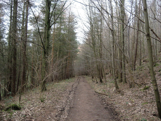 Cleveland Way in Quarry Bank Wood