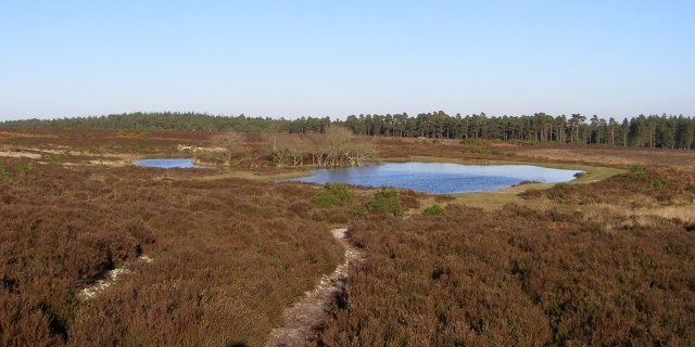 Slufters Pond, New Forest