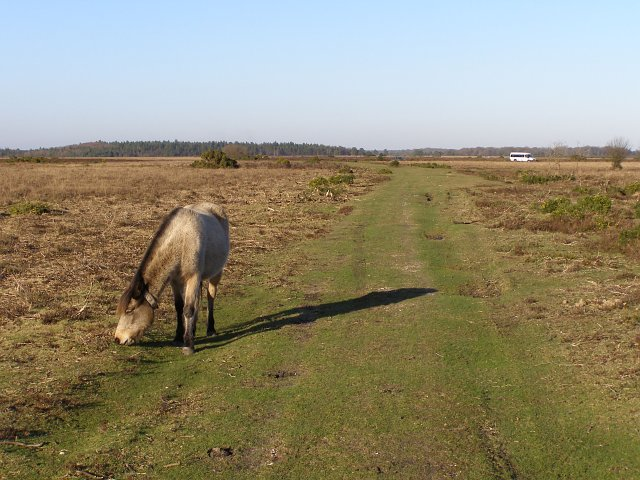 Track north of Slufters Pond, New Forest