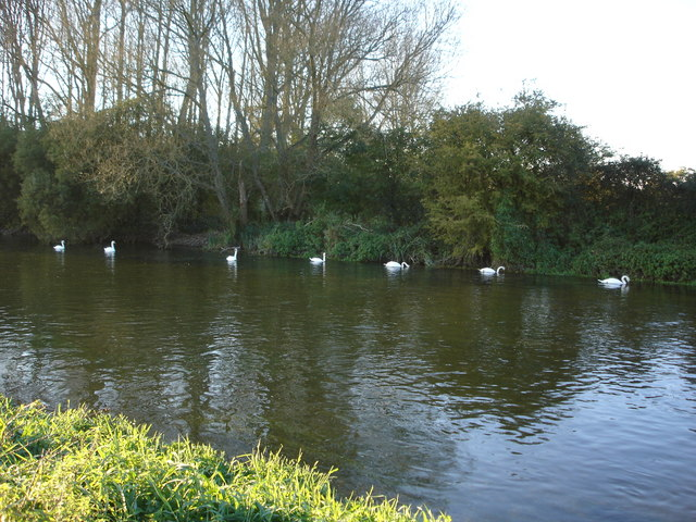 Swans on the Avon, Downton