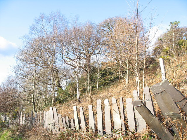 Slate-fencing and wooded slope above Lon Cae Hywel