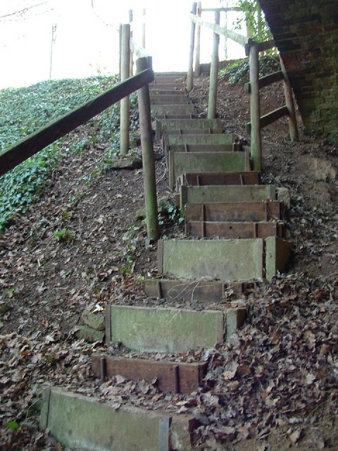 Steps into the Nature reserve