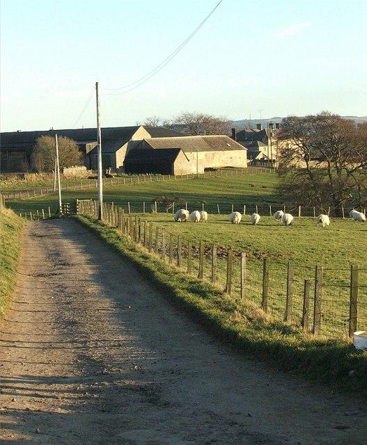 Driveway to Shawdon Wood House