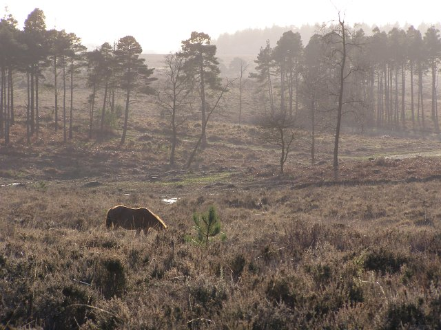 Heathland to the east of Milkham Inclosure, New Forest