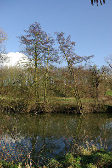 Alders by the Medway