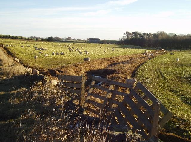Farmland near Silverburn