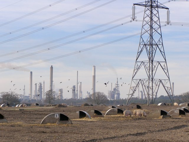 Pigs and a pylon, Fawley