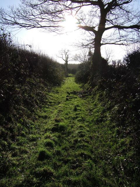 Northlew Footpath 21