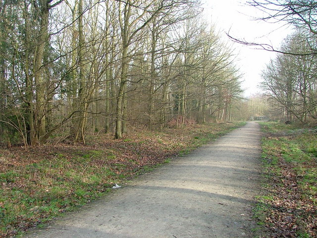 Footpath in Oversley Wood