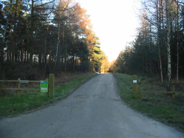 Good track and public footpath into woodland on Yearsley Moor