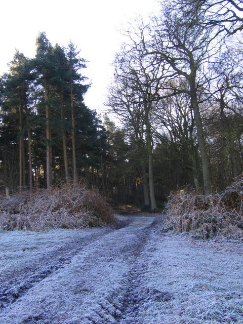 Thurtle Wood