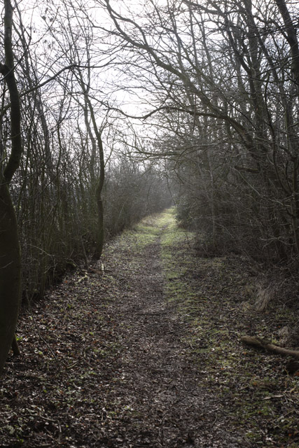 Track to Hayley Wood, Longstowe, Cambridgeshire