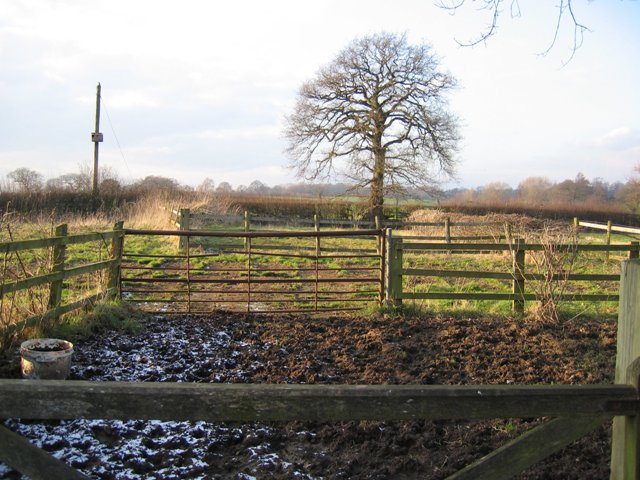 Paddocks near The Smithy, Hoofield