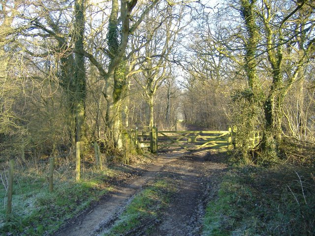 Flaxlands Wood