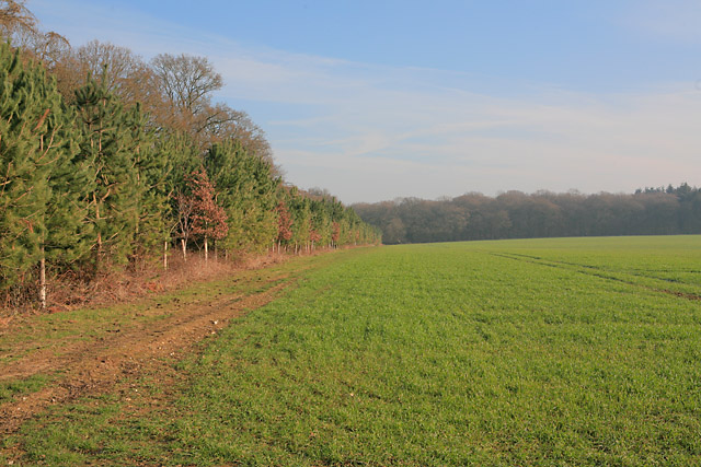 Looking towards Brickkiln Wood from footpath