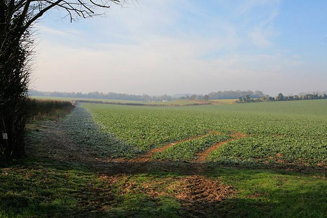 Fields east of Tufton Warren Farm
