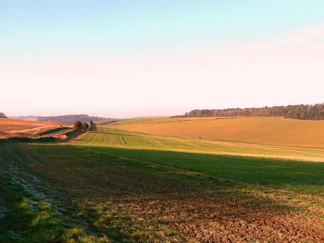 A view in the Marlborough Downs