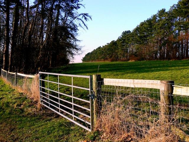 A view north-west from Maisey Farm, near Marlborough