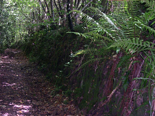A Forgotten Lane