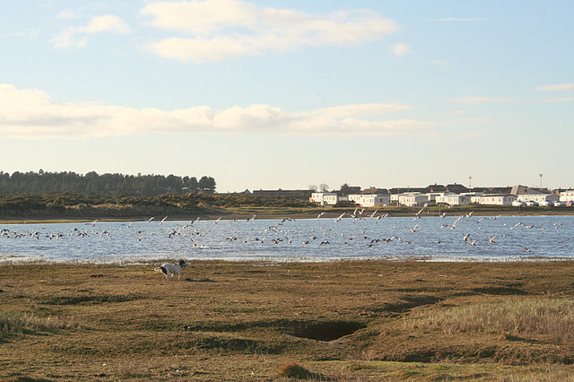 A Spaniel creates mayhem with the Oyster Catchers and Wigeon.