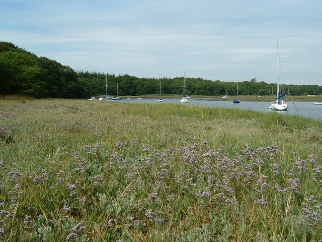 Sea Lavender on the Beaulieu River bank
