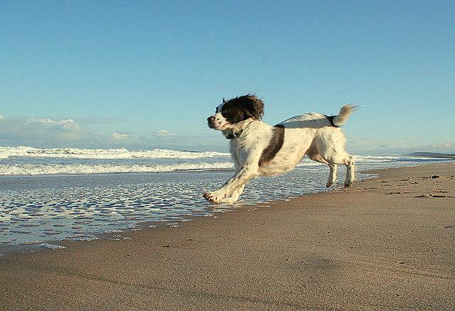Joie de vivre and levitation on the East Beach!