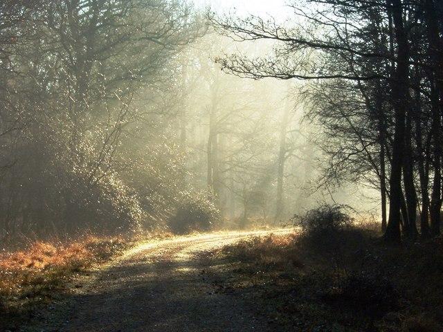 Misty Sunshine on a winter's day