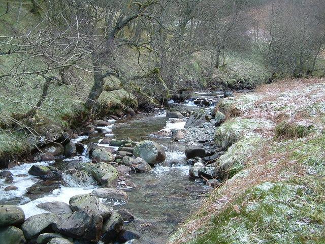 Milton Glen Burn, in the woods