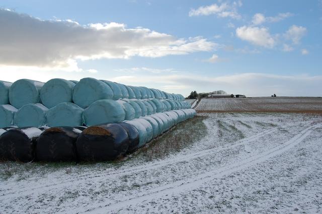 Turquoise bales at Hillhead Farm
