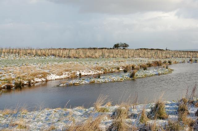 Pond at Dambrae