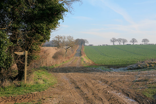 Byway south of Brickkiln Wood