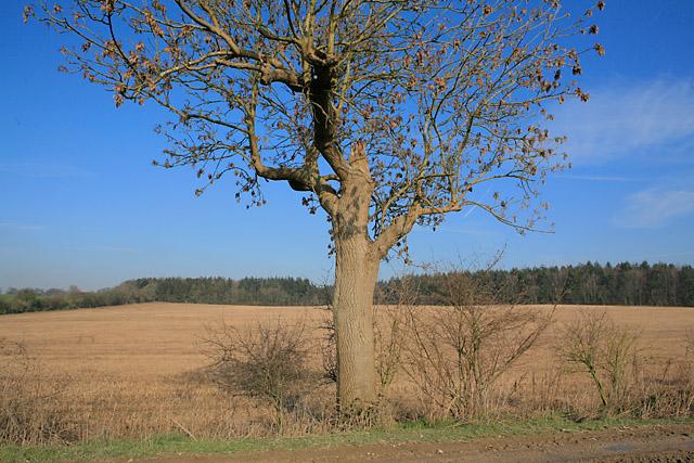 Field between byway and Brickkiln Wood