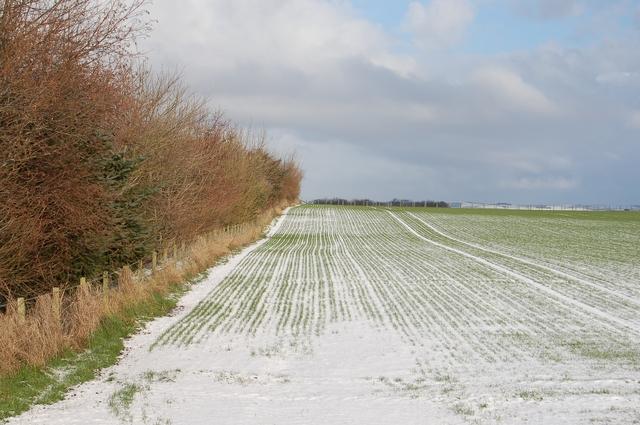Field at Kirkhill