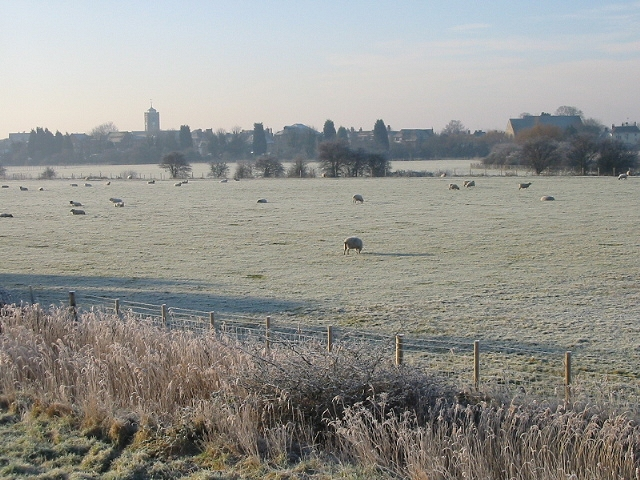 Sheep in field on a frosty morning