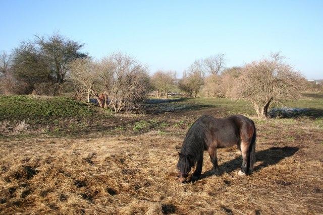 Ponies grazing off Millgate