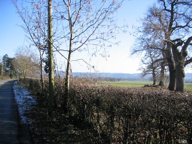 Tree Line near Tattenhall