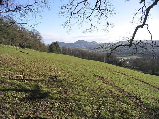 Pasture field at Crotchetknowe