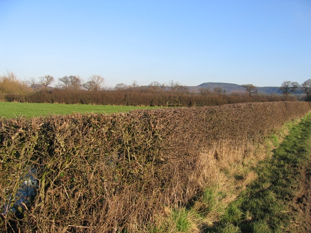 Hedge and Field on Burwardsley Road