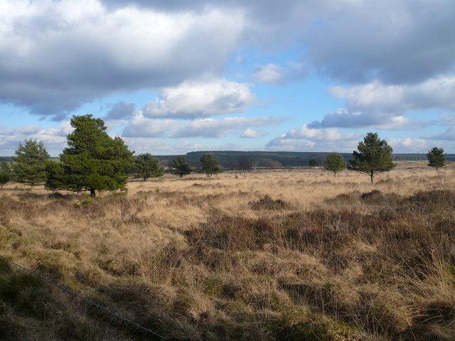 Farley Moor Boundary - View across Matlock Moor