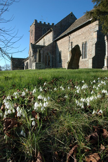 Snowdrops and St Mary's church, Almeley