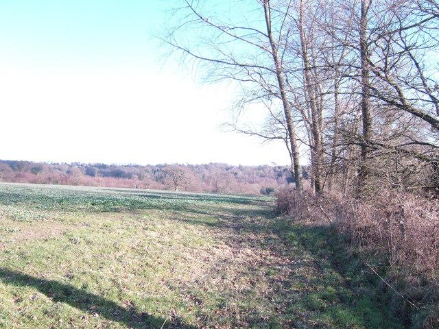 Field edge; Oxpasture Wood