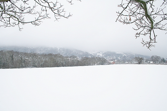 Mayall's Coppice during February Snow