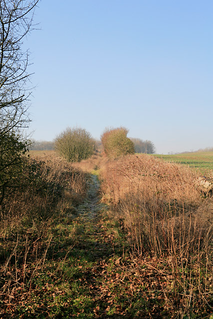 Bridleway ascends the hill towards Cranbourne Wood