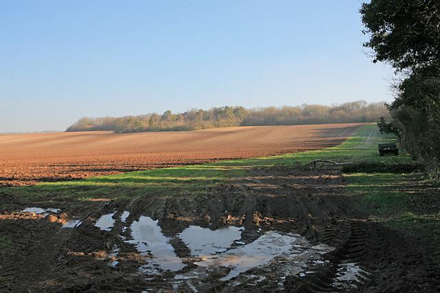 Fields rising to Norton Copse