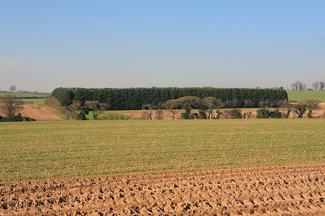 Rectangular coniferous plantation north of Upper Norton Farm