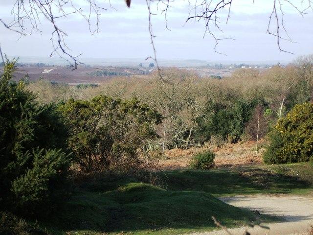 View towards Ogdens Purlieu from High Corner Inn Road