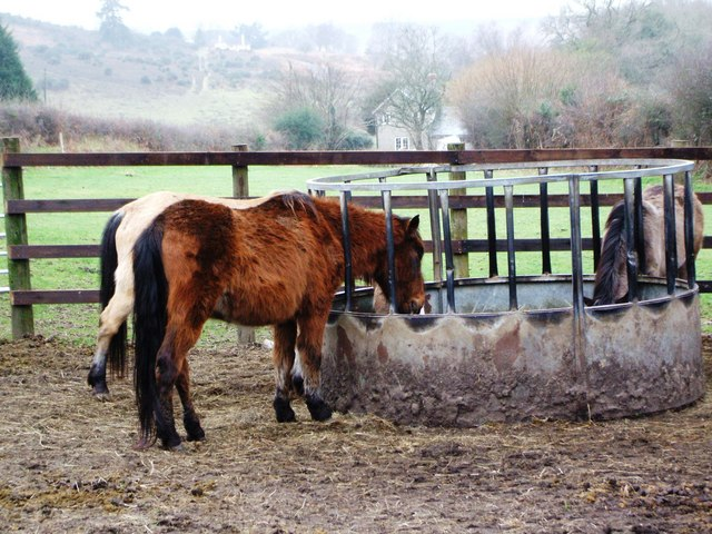 Winter Feed for the Ponies