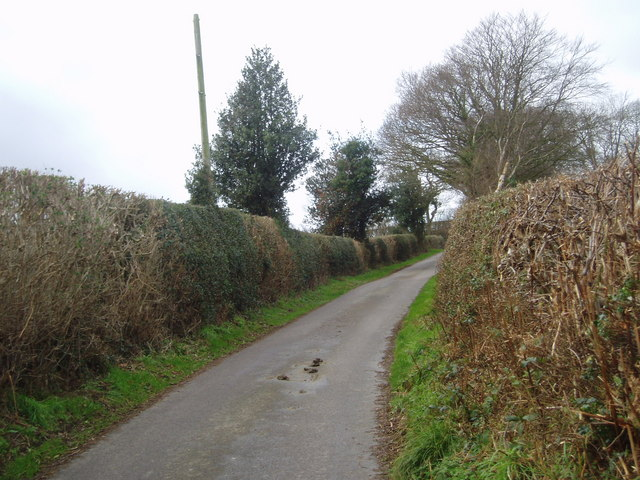 Three Holly Trees on Combe Ash Lane